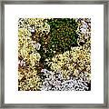Reindeer Moss And Lichens Framed Print