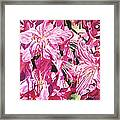 Rhodo Blossoms Framed Print