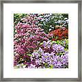 Rhododendron Garden Framed Print