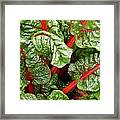 Rhubarb Abstract Framed Print