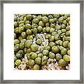 Rice And Peas Framed Print