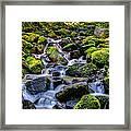 Rippling Rainforest Framed Print