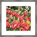Rising Spring Framed Print