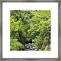 River Glimpses Framed Print