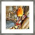 River Rocks 8 Framed Print
