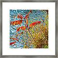 River Sumac Framed Print