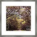 Road Of Trees Framed Print