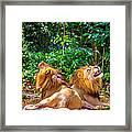 Roaring Lions Framed Print