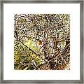 Robin Perched On Olive Tree Framed Print