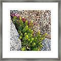 Rock Flower Framed Print
