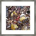 Rocks And Berries Framed Print
