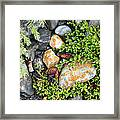 Rocks And Lichen Framed Print