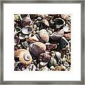 Rocks And Shells Framed Print