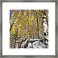 Rocky Aspen Framed Print