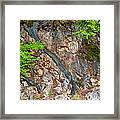 Roots And Rocks Framed Print