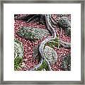 Roots Framed Print by Edward Fielding