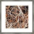 Roots Of A Japanese Red Cedar Framed Print
