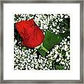 Rose And Baby's Breath Framed Print