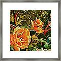 Rose Ridge Framed Print