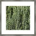 Rosemary Forest Framed Print