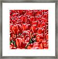 Tulips At The Plaza Hotel Framed Print