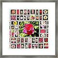 Roses Collage 2 - Painted Framed Print by Stefano Senise