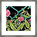 Roses On Fence Framed Print