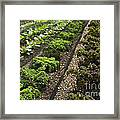 Rows Of Kale Framed Print
