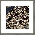 Rows Of Roe Framed Print
