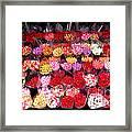 Rows Of Roses Framed Print