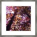 Royal Trees Series 1 Framed Print