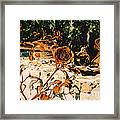 Rust And Roses Framed Print