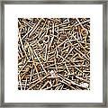 Rusty Nails Framed Print