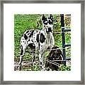Sad Dogs Framed Print