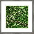 Sage Leaf Framed Print