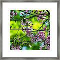 Sakura Tree In Bloom - Featured 3 Framed Print