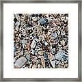 Sallie's Sea Shells Framed Print