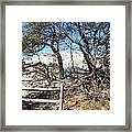 Sand Dune With Trees Framed Print