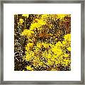 Santa Fe Yellow Framed Print