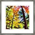 Saratoga Tree Framed Print
