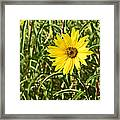 Save The World Little Bee Framed Print