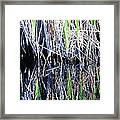 Sawgrass Reflections Framed Print