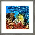 School Of Fishes Framed Print
