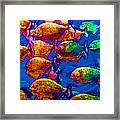 School Of Piranha V3 Framed Print