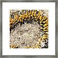 Sea Anenome In The Sand Framed Print