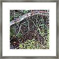 Sea Grape Jungle Framed Print