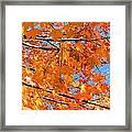 Sea Of Orange And Blue Framed Print