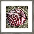 Sea Treasure Framed Print
