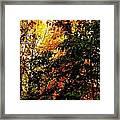 Season Of Color Framed Print