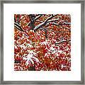 Seasons Of Change Framed Print
